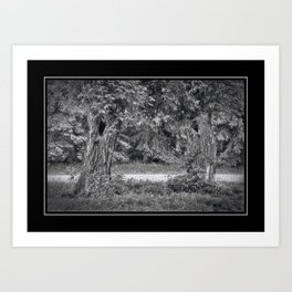 Two Trees on the Trail Art Print