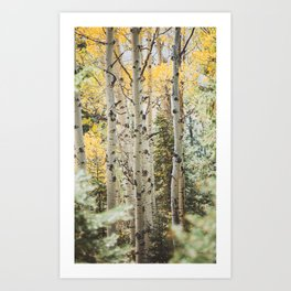 Colorful Colorado II x Golden Aspens Art Print