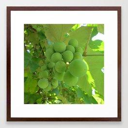 Green Grapes 1 Framed Art Print
