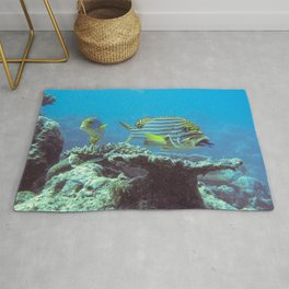Sweetlips at the cleaning station Rug