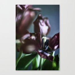 Velvet Canvas Print