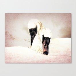 Dreamy White Swans (bird) Art A304 Canvas Print
