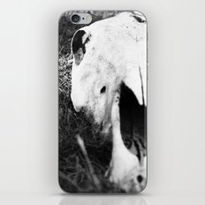 The Skull of a Cow iPhone & iPod Skin