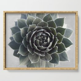 Succulent Photography Nature Plant Green Cactus Floral Art Serving Tray