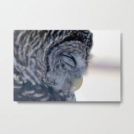 Sleeping Owl Metal Print