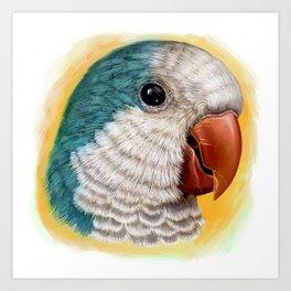 Blue quaker parrot realistic painting Art Print