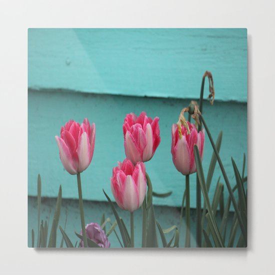 Tulips Against The Wall Metal Print