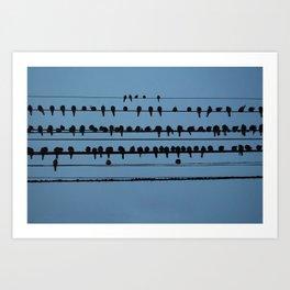 birds on a wire feeling blue Art Print