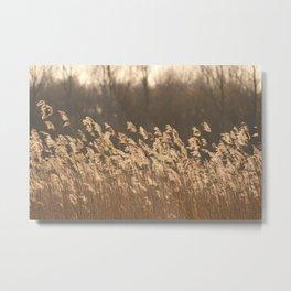 Sunlight Nature Captured Metal Print
