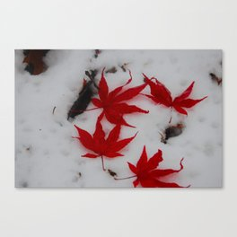 red maple on a field of snowy white Canvas Print