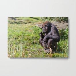 an sitting gorilla Metal Print