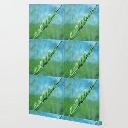 willow catkin Wallpaper