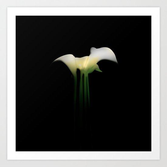 Calla Lily on Black Art Print