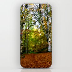 Autumn Trees Woodland iPhone & iPod Skin