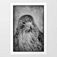 hawk Art Prints featuring Hawk by SilverSatellite