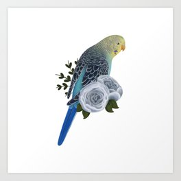 Blue and Yellow Budgerigar Art Print