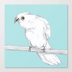 Bald-Eyed Cockatoo Canvas Print