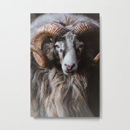 Portrait of a ram Metal Print