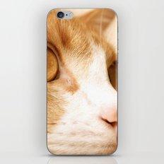 My cat iPhone Skin