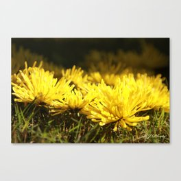Beautiful Yellow  Canvas Print
