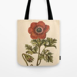 1800s Encyclopedia Lithograph of Anemone Flower Tote Bag