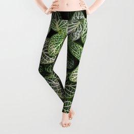 Fittonia / Mosaic Plant / Nerve Plant Leggings