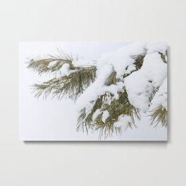 Winter's Pine 7 Metal Print