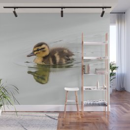 Duckling swimming Wall Mural