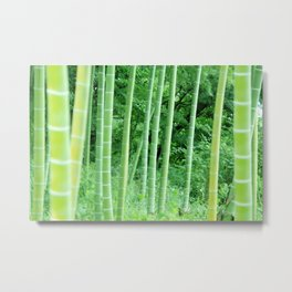 Japanese Bamboo Forest Photography Metal Print