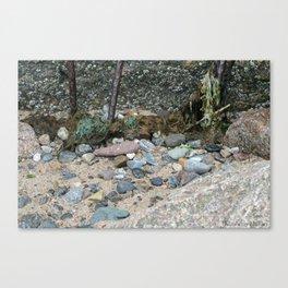 Barnicles Canvas Print