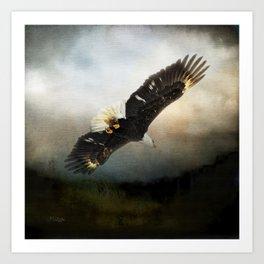 Eagle Soaring Art Print