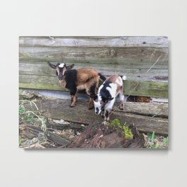 On an Adventure Metal Print