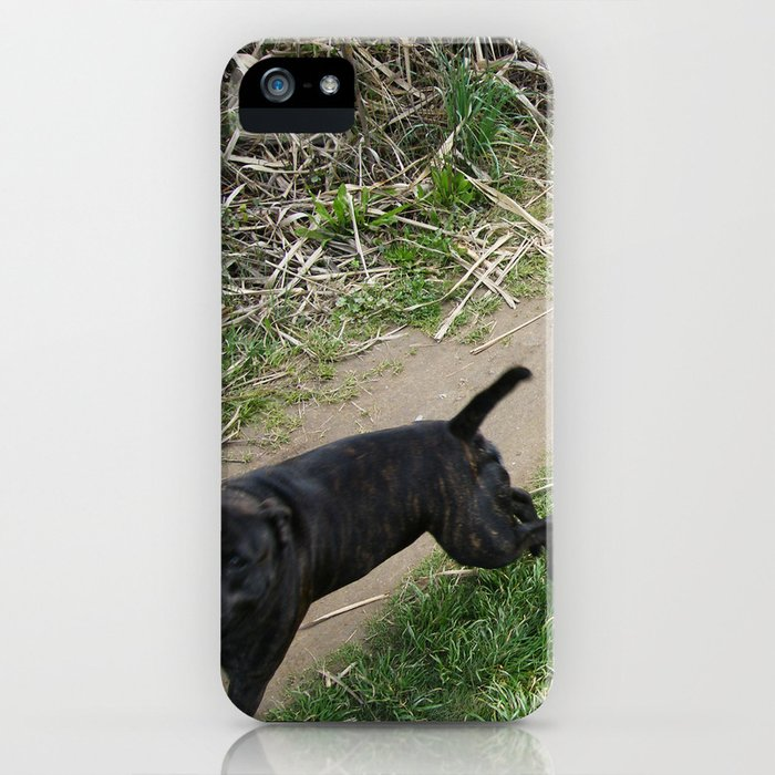 Dogs just want to have Fun iPhone Case