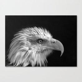 Majestic Bald Eagle Canvas Print