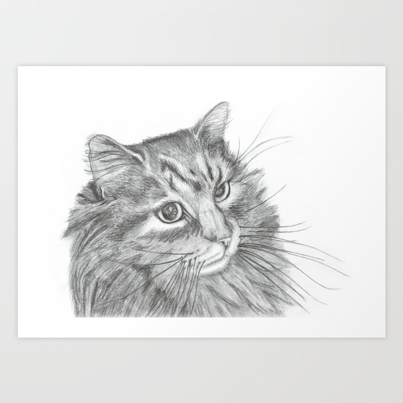 Fluffy cat pencil drawing art print