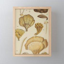Naturalist Mushrooms Framed Mini Art Print