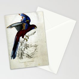 Pennants Parrakeet6 Stationery Cards