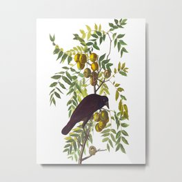 American Crow Vintage Bird Illustration Metal Print