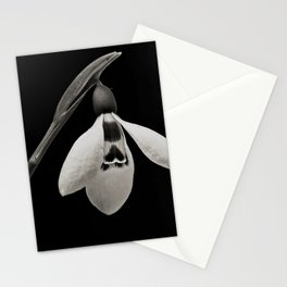Snowdrop blossoms floral black and white photography / photograph Stationery Cards