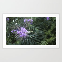 Coldwater Lake Flower # 2 Art Print