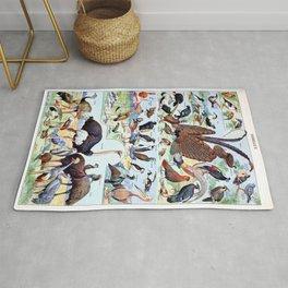 Adolphe Millot - Oiseaux pour tous B - French vintage poster Rug
