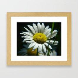#406 flower bug and sun house bitterroot mt macro Framed Art Print
