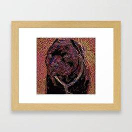 Pit Bull Models: Khan 02-05 Framed Art Print