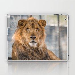 Lambert the Lion All Grown Up Laptop & iPad Skin