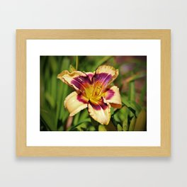 Peach And Wine Daylily Framed Art Print