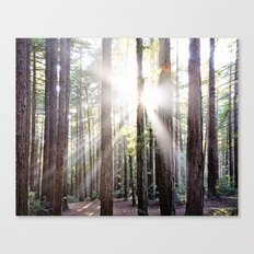 Sunburst Through the Redwoods Canvas Print