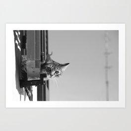 Curious Cat of Matera Art Print