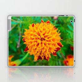Orange Tagetes flower Laptop & iPad Skin