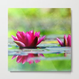 Lily of the Water Metal Print