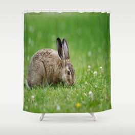 Lepus europaeus young hare Shower Curtain